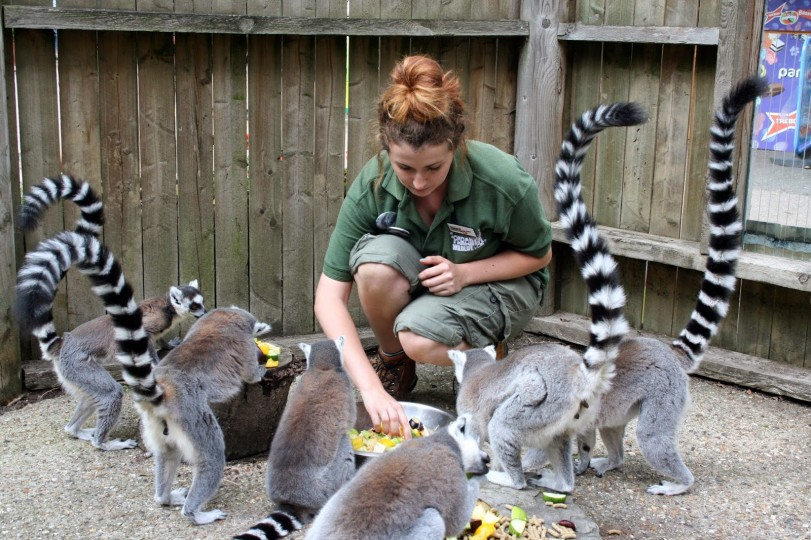 Lemur Keeper for a Day