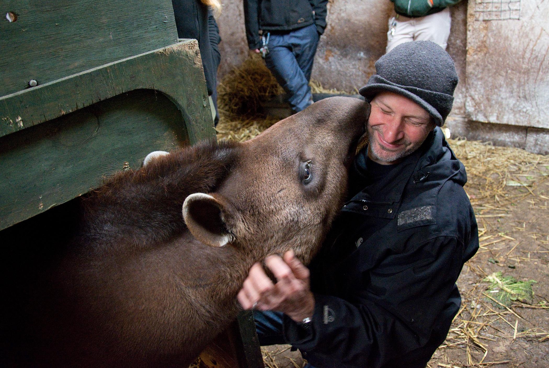 Tapir Zoo Keeper Experience