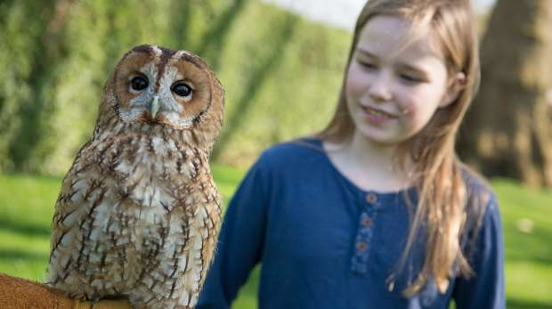 London Zoo Keeper for a Day Experience Montage Owl