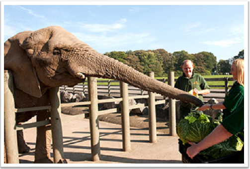 Zoo Keeper Encounter Elephants