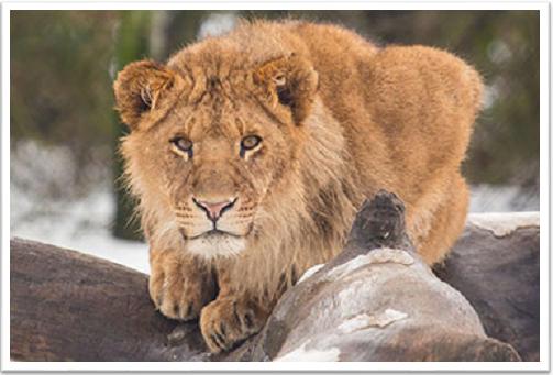 Zoo Keeper Encounter Predators