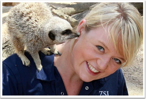 Zoo Keeper for a Day MeerKat Experience