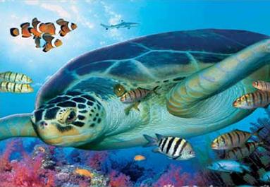 Sea Park Keeper Experience
