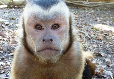 Primate Keeper Days - The Monkey Sanctuary