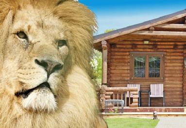 Big Cats at Wildlife Heritage Foundation