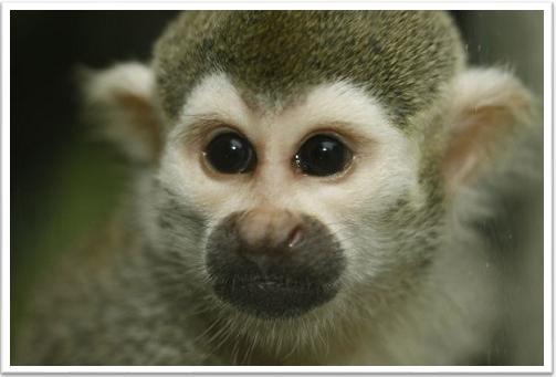 Hertfordshire Monkey Keeper Experience