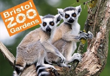Zoo Keeper Experience Days at Bristol Zoo